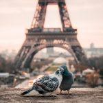 best vegan restaurants in Paris