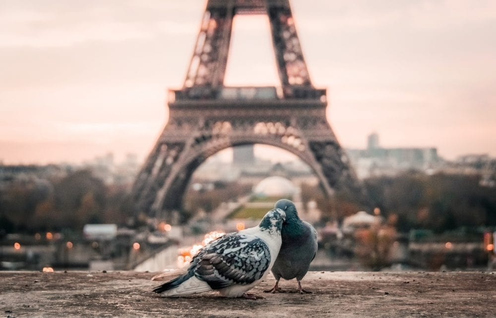 Paris Vegan Guide to the Best vegan Restaurants in Paris