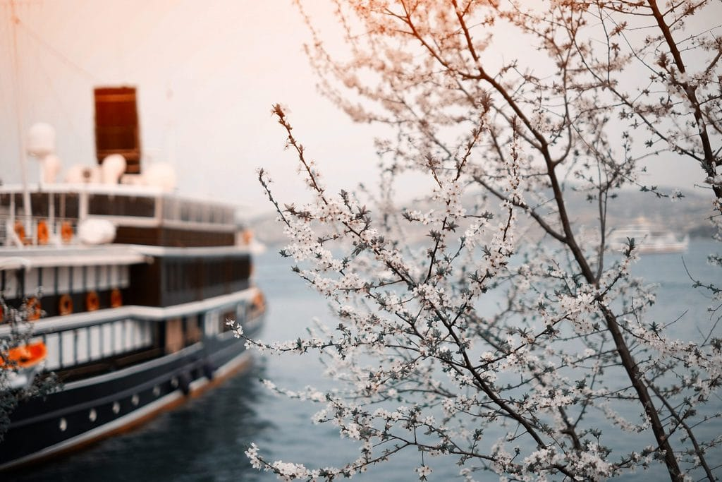 Vegan Cruises - Are They Really Vegan?