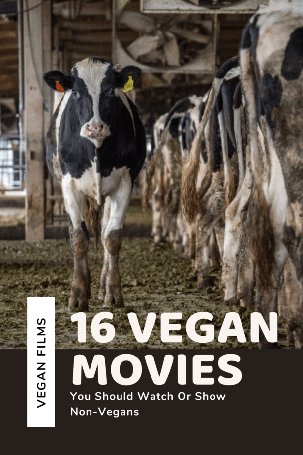 Vegan films for anyone who is thinking about going vegan, doesn't know the horrors of the farming industry, wants to learn about healthy vegan lifestyles, or is already vegan and wants to educate themselves on the topic! Here are 16 of the best documentaries out there on veganism!